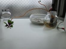 美容室THETA(シータ)のほのぼのニュース                                          TEL03-3947-8665-110531_0845~01.jpg